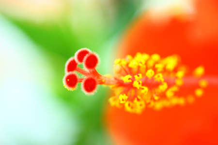 gynoecium: The beautiful flower Stock Photo