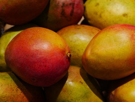Fresh colorful tropical mangoes on display at farmers market