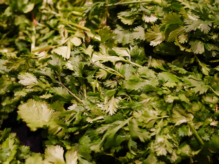 Coriander, also known as cilantro or Chinese parsley, is an annual herb in the family Apiaceae