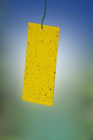 Piège jaune collant pour petits insectes envahissants suspendus dans le jardin