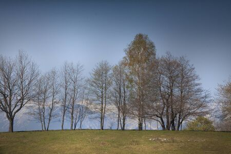 Trees on Top of the Hill in Early Springtime in Banjsice Slovenia