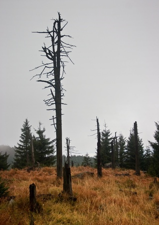 Abandoned tree in forest with stumps in wet and grassy landscape