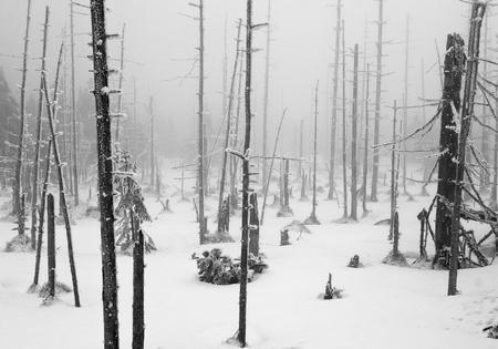 Donker en Misty Forest met Dode Bomen en Trunks in Winterlandschap zwart wit Stockfoto