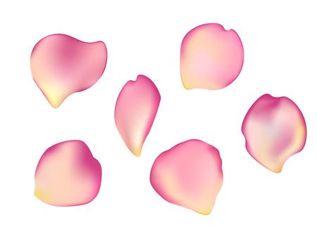 Elegante Reihe von schönen Rosenblättern.