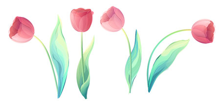 Vector red tulip flowers head isolated on a white background. Creative illustration for your design Illustration
