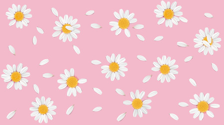 camomile tea: Soft pastel color floral 3d illustration on pink background. Yellow and white wild camomile flowers and petals watercolor style vector illustration template. Eco organic pattern