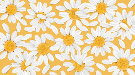 camomile tea: Soft pastel color floral 3d illustration on orange background. Yellow and white wild camomile flowers and petals watercolor style vector illustration template. Eco organic pattern Illustration