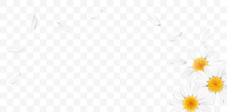 Zachte pastelkleur bloemen 3d illustratie op transparante achtergrond. Geel en wit wild kamille bloemen en bloemblaadjes aquarel stijl vector illustratie sjabloon. Eco organisch patroon