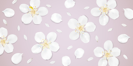 camomile tea: Soft pastel color floral 3d illustration on pink background. White wild Camomile and Sakura flowers with petals watercolor style vector template. Eco organic pattern