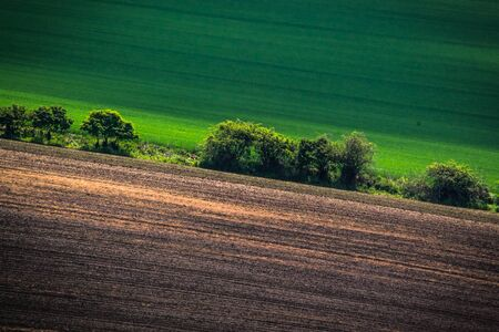 moravia: Green spring field abstract eco background. Summer hill wallpaper.