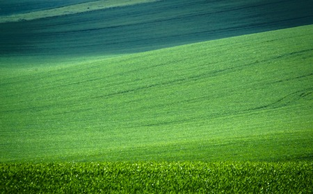 Green spring field abstract eco background. Summer hill wallpaper.