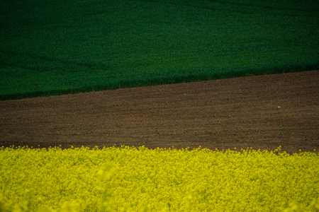 Green spring field abstract eco background. Summer yellow Rapeseed wallpaper. Blooming canola flowers.