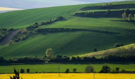 Green spring sown field background. Summer hill nature wallpaper. South Moravia, Czech Republic