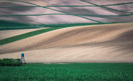 Green spring sown field abstract eco background. Summer hill amazing paysage wallpaper. South Moravia, Czech Republic Фото со стока