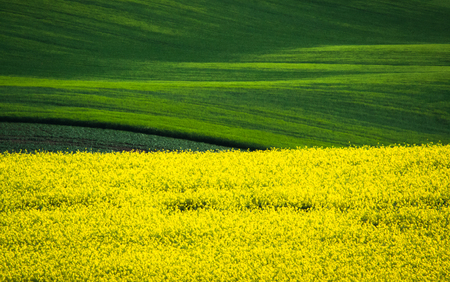 Green spring sown field abstract eco background. Summer hill amazing paysage wallpaper. South Moravia, Czech Republic Stock Photo