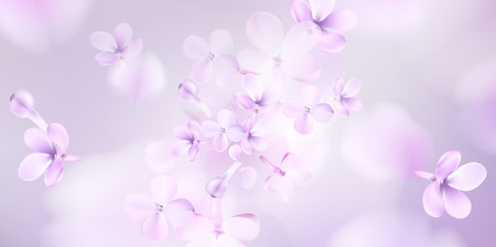 Floral background with soft pink lilac flower and petals vector illustration template Standard-Bild - 122558951