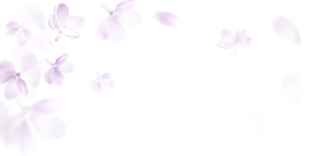 Floral background with soft pink lilac flower and petals vector illustration template Standard-Bild - 122558954