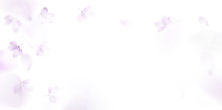 Floral background with soft pink lilac flower and petals vector illustration template Standard-Bild - 122558955