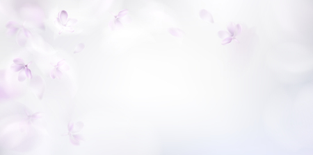 White background with soft pink lilac flower petals and feathers vector illustration