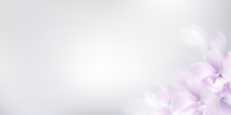Floral white background with soft pink lilac flowers and petals Standard-Bild - 122558969
