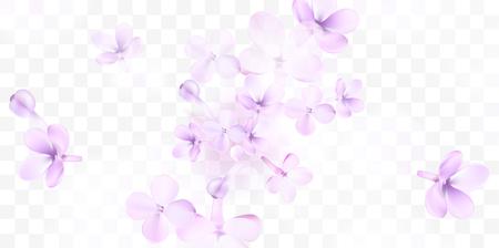 Floral background with soft pink lilac flower and petals vector transparent illustration template Standard-Bild - 122558971