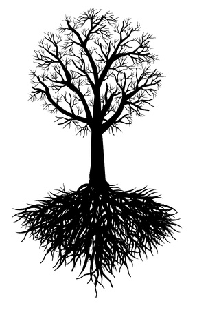 gnarled: tree root Illustration