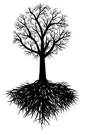 tree root Illustration Stock Vector - 12888541