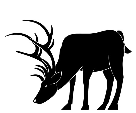 deer drink Vector