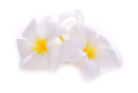 subtropical: frangipani flower isolated on white backgrounds