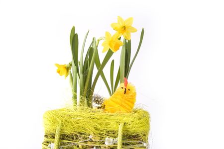 Chick in basketry with some flowers - isolated photo