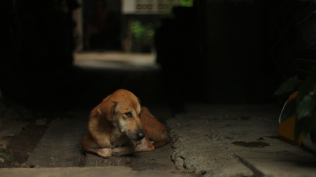 Stray Brown Dog Sad