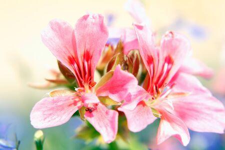 Orchid on sunshine