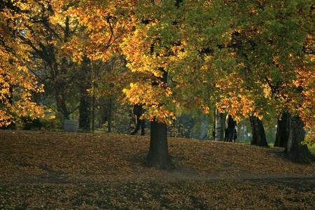 Autumn at city park photo