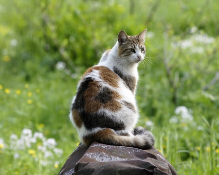 ruberoid: Cat female at field looking around Stock Photo