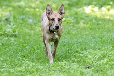 Dog in hunting stand on grass field