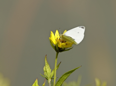 Little moth on yellow flower
