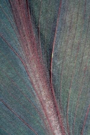 Liaf of exotic planr close up