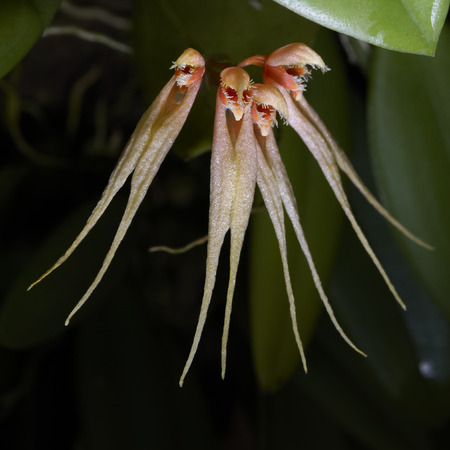tropics: Rare orchid flowers blossom in tropics