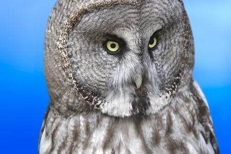 glance: Owls glance