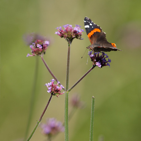 dring: Butterfly resting on flower