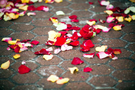 Rose petals on the road, wedding tradition Stock Photo - 8925808