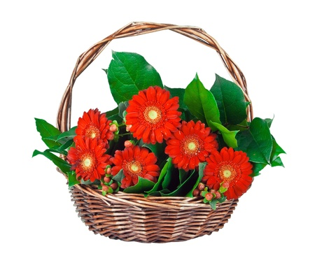 Red daisies in basket isolated on white Stock Photo - 12960929