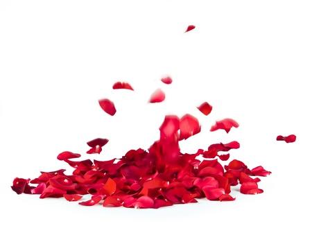 흰색 배경에 장미 꽃잎 떨어지는