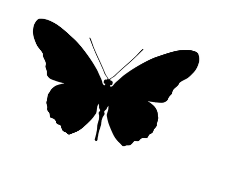 butterfly isolated: Silhouette of butterfly, isolated on white, illustration Illustration
