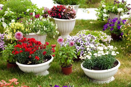 spot the difference: Different kinds of garden flowers in pots. Landscape design flowers. Colorful petunias in potflowers Stock Photo