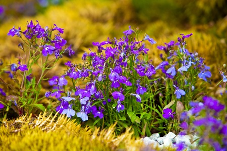 Gardening landscape design flowers close up view Stock Photo