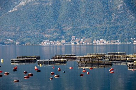 commercial fisheries: Cage farming agriculture, fish farming cage systems in Kotor Bay in Montenegro Stock Photo