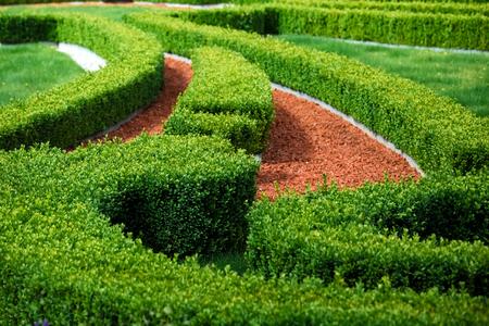 Green bushes labyrinth, landscape gardening design