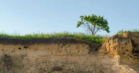 A tree growing on the edge of a cliff. Slice of earth with layers of clay with blue sky. Concept for ecology or environment