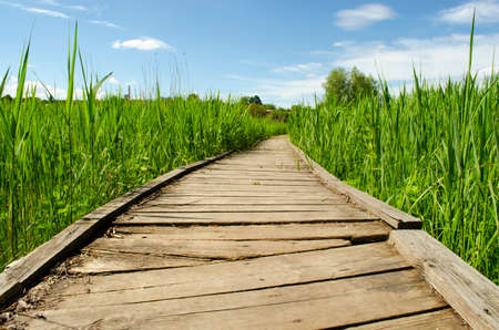 Footbridge crossing the dense thickets. Path through a green summer park. Wooden walkway, path in dense greenery. Thickets of grass. travel concept